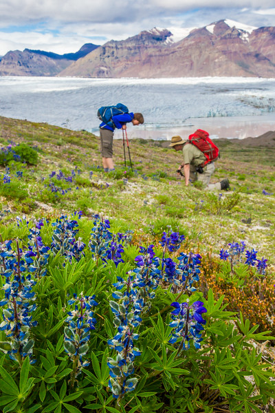 Undergraduate geology major Kailyn Davis, left, hikes with Paul Layer, dean of UAF's College of Natural Science and Mathematics, during a June 2015 extended field trip near the Nabesna Glacier in the Wrangell-St. Elias National Park and Preserve.