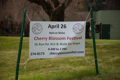 CherryBlossom15-9