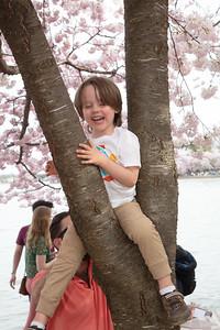National Cherry Blossom Festival