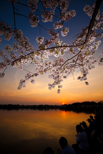 sunset over the tidal basin