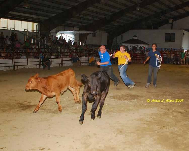 Calf scramble.