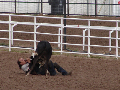 Steer Wrestling (formerly called Bulldogging): Who's got who down?