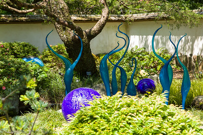 Chihuly at Atlanta Botanical gardens