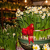 Narcissus (daffodils) on sale