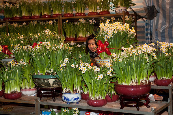 Chossing the Narcissus (daffodils) to buy