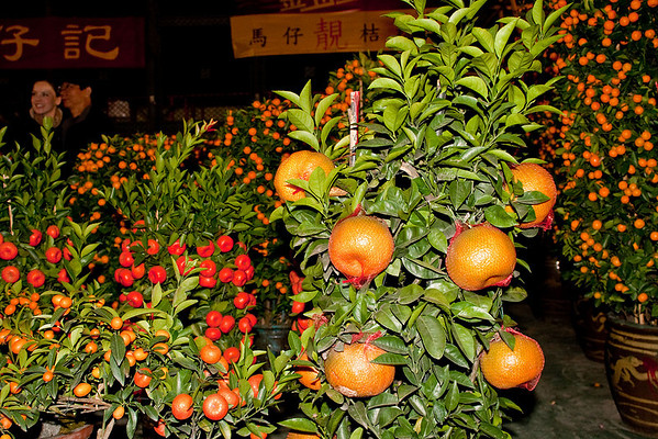 The biggest of the tangerines