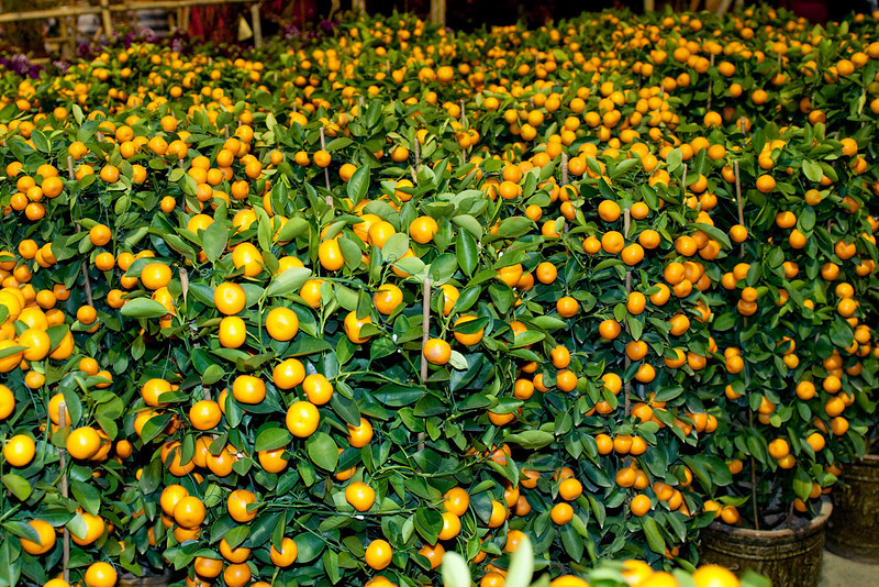Tangerines are to Chinese New Year what Christmas Tree is to Christmas