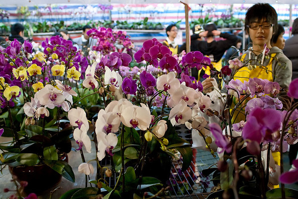 Choosing the best orchids to take home