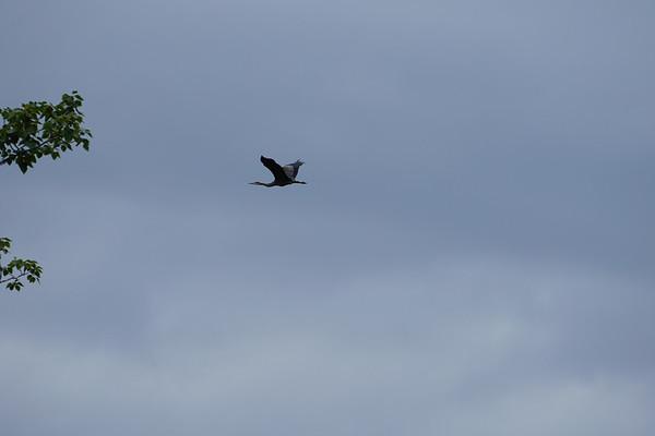 Found a crane!