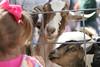 05 12 07 Springfest 2007 (108)