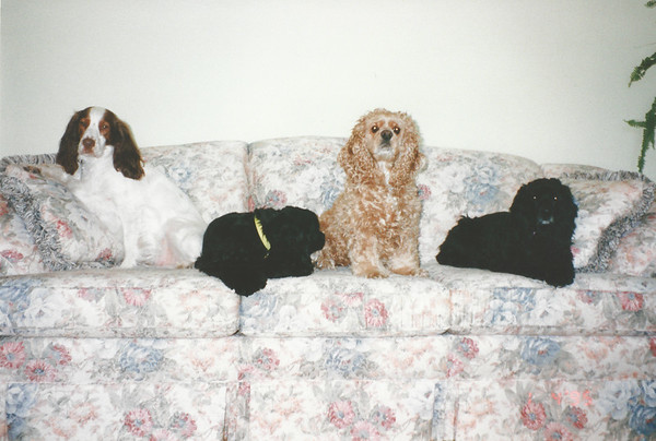 Chloe, Jasper, Clancy and Toby