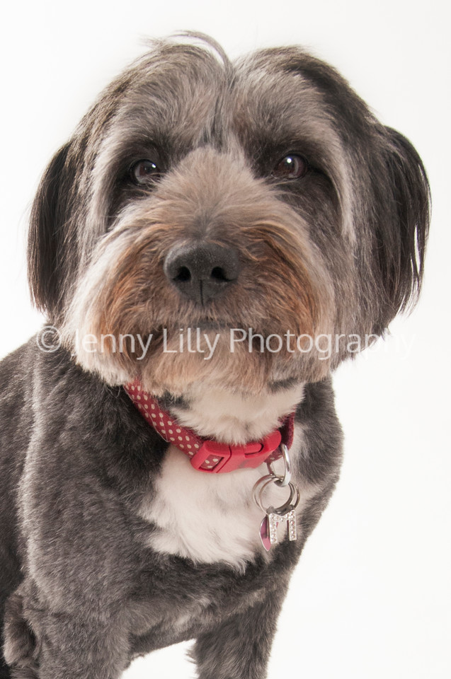 dog  isolated on white background