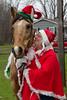12-06-2014-Horse-Mexico-Christmas-4755