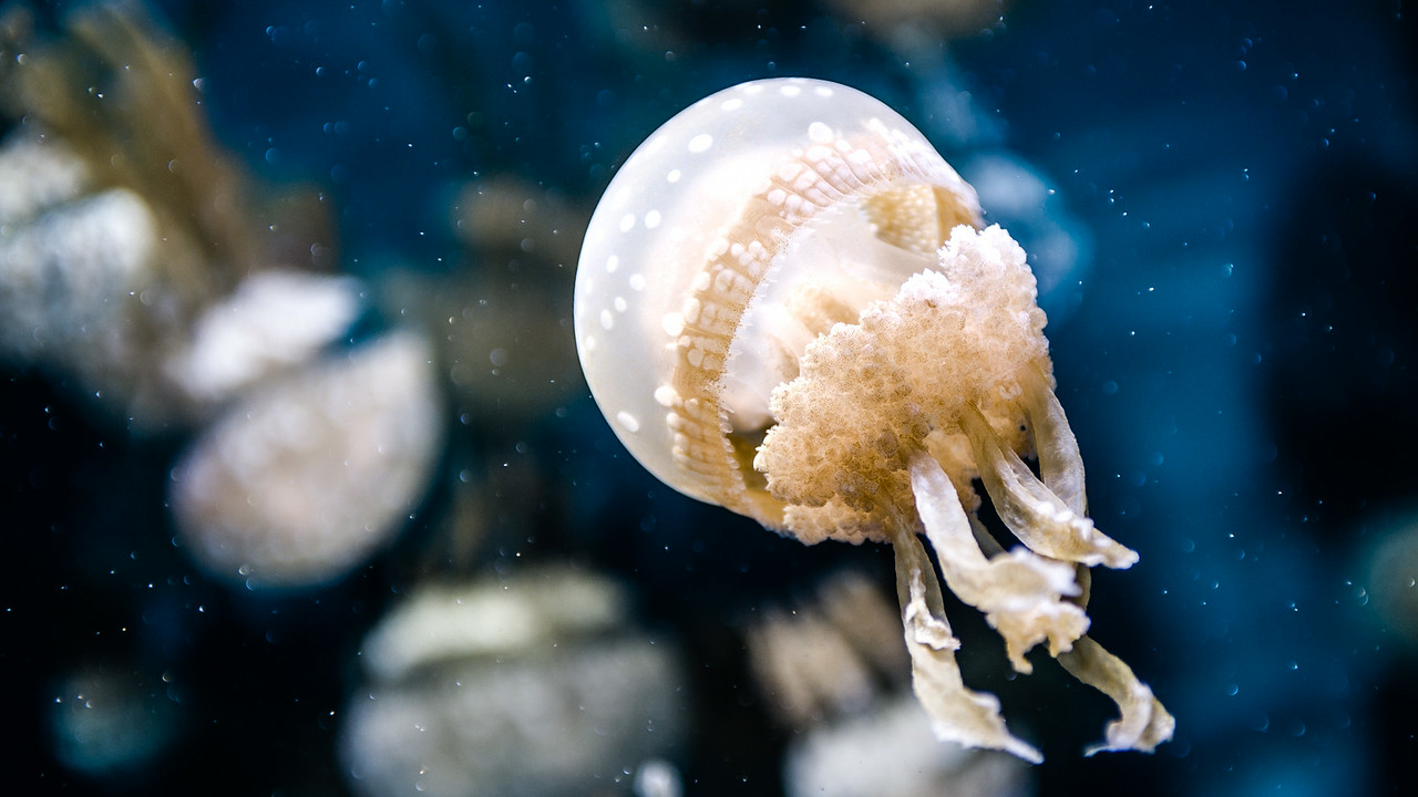 Where we saw spectacular things, like jellyfish. It had been a while since we had last visited the aquarium.