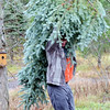 1127 christmas trees 3