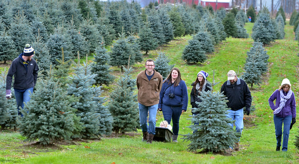 1127 christmas trees 5