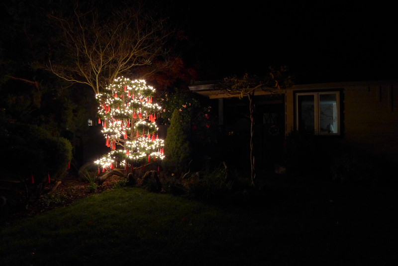Mom's Christmas tree in the front yard, Sonoma, 2014.