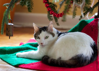 Linus under the Christmas tree