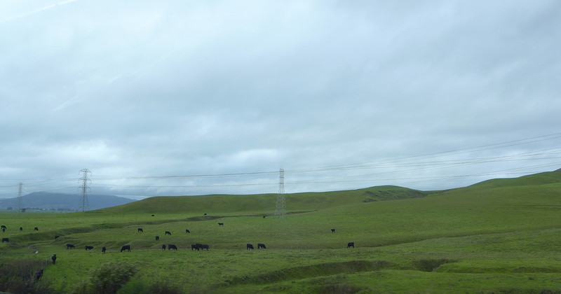 Must be the cows.