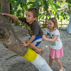 Chris (My name for him was Chris-of-many-hands), and his sister climbing the nanci tree in the back yard of the church.
