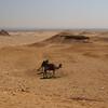 Giza Plateau Panorama