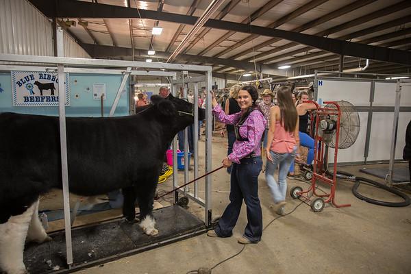 Skylar-Clark County 2017 Market Steer-Champion & Reserve Champion