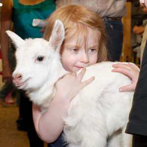 baby jesus goat and young apostle it seems like at clark county fair rodeo photo by mark bowers