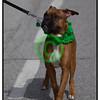 20110317_1450 - 1374 - 2011 Cleveland Saint Patrick's Day Parade