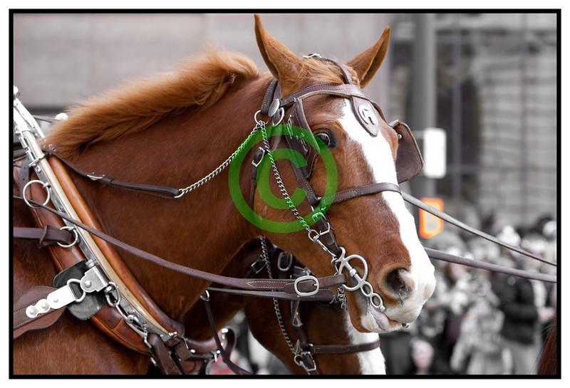 20110317_1413 - 0858 - 2011 Cleveland Saint Patrick's Day Parade