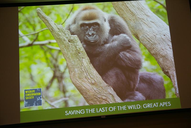 2015.05.16 WCS Orangutans Rosewood Sandhill