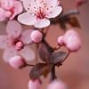 2011Apr06-spring_MG_4214