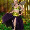 fairy_comp_Stareff