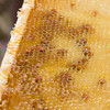 Honey Comb with some bee bread in the dark chambers.