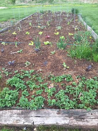 Community Garden 2015
