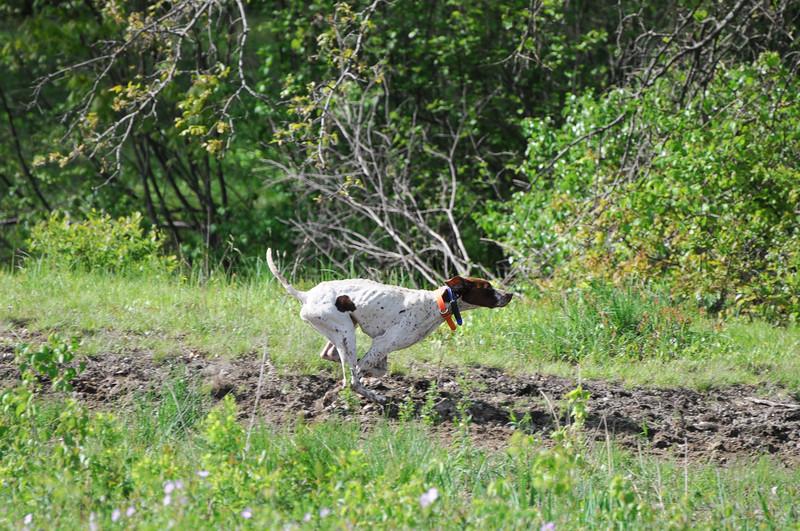 bird-dog-trials-3285