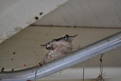 06-02-2011-vegas-home-search-098