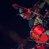 Summer_Signout_concert_Alanragaphotography_wellingtonphotographer_20131204-0142