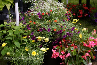 Sean Patrick's Plants always has wonderful hanging planters!