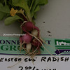 Easter egg radish...loved the name.  ;-)