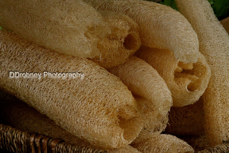 Loofah sponges!  Is there anything you CAN'T get at the CRFM?!?