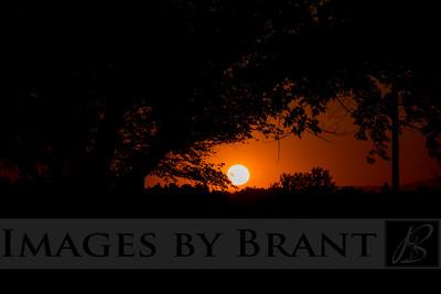 ImagesByBrant_Shane-4902