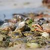 Crab hunt