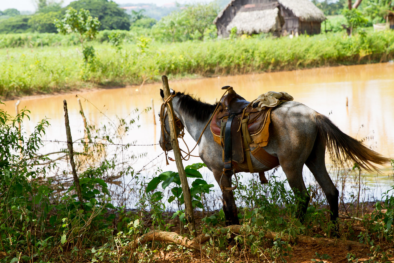 15. A horse waits for its rider by a pond in Viñales, Cuba.