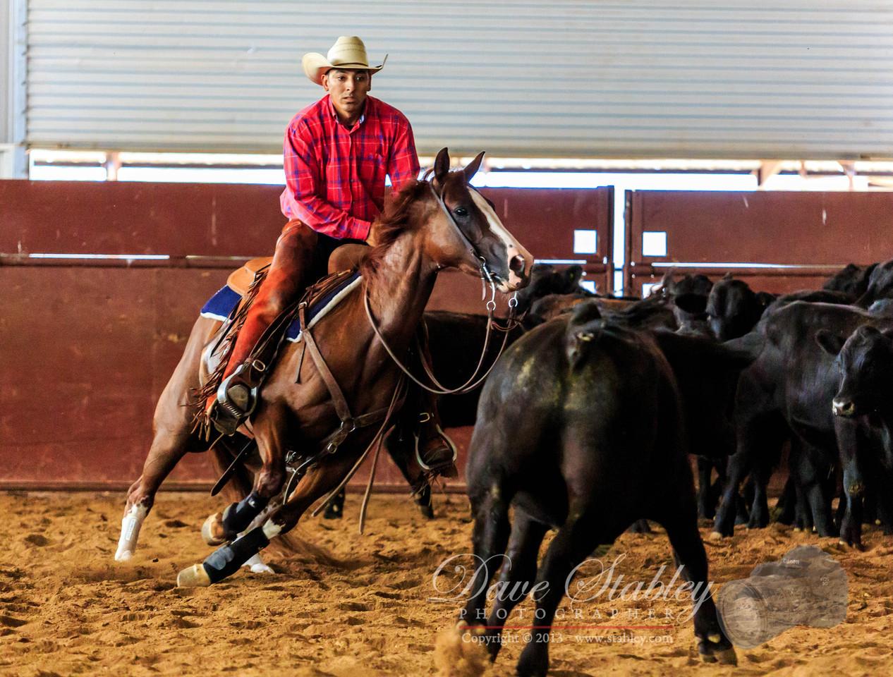 NM Cutting Horse-6934