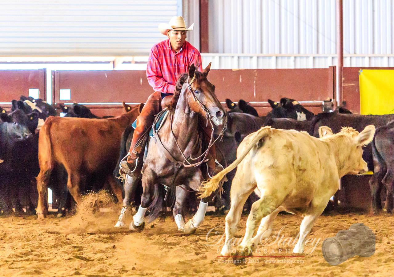 NM Cutting Horse-6969