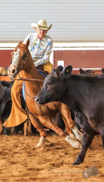 NM Cutting Horse-6862