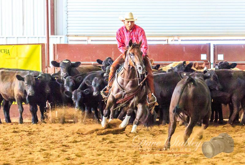 NM Cutting Horse-6947
