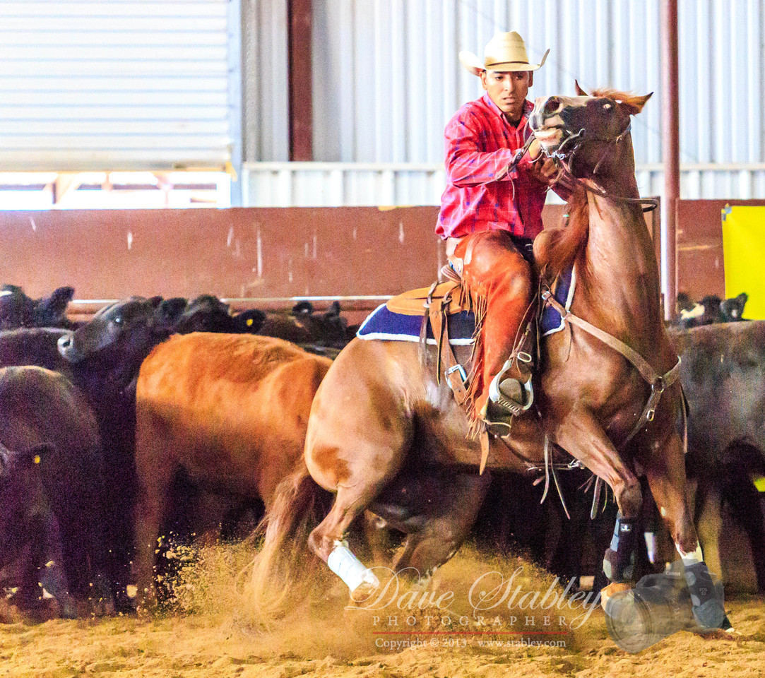 NM Cutting Horse-6938