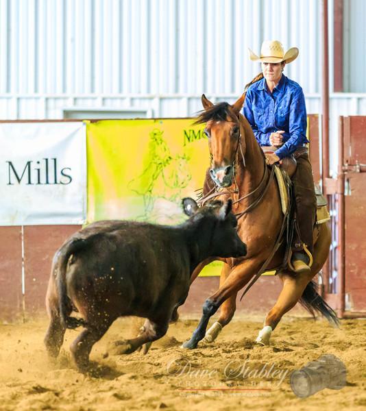NM Cutting Horse-6878