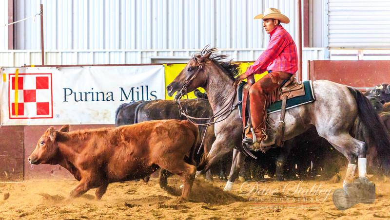 NM Cutting Horse-6955